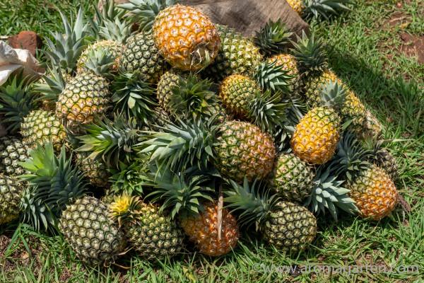 Ananas-Uganda